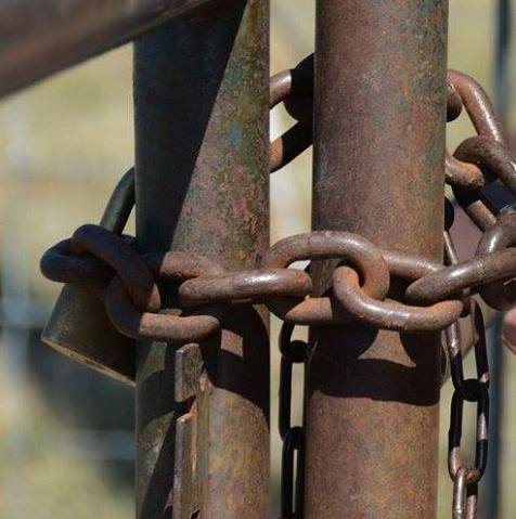 377 suspects arrested for stock theft in the Eastern Cape