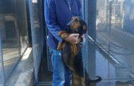 Bloemfontein dog handler bids farewell to SAPS after 43 years of service