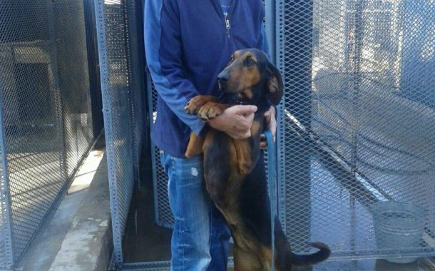 Bloemfontein dog handler bids farewell to SAPS after 43 years of service