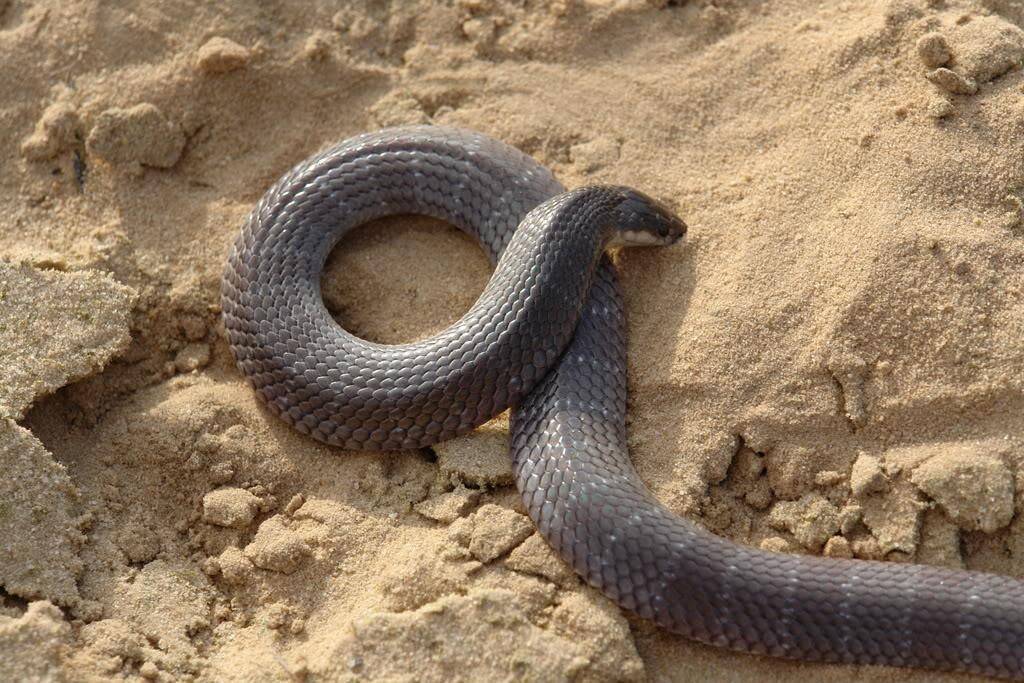 Snake Pharm South Africa invites the community to a live snake demonstration and education in Hluhluwe