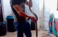 Black Mamba Found In Home in Oaklands, KZN