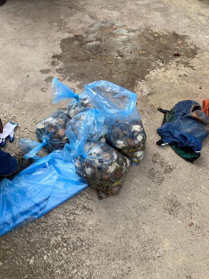 PE K9 unit arrest Abalone poachers