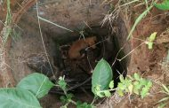 Dog Rescued From Drain in Verulam