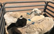Duo arrested for Stock Theft