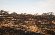 Current needs assessments of fire affected Western-Free State Farmers