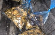 Suspects arrested with abalone
