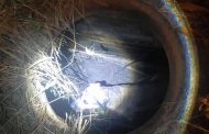 Dog rescued from manhole in Tongaat